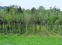 Bio Baumschule Weidli Wir Verkaufen Bio Obstjungbaume Ab Hof